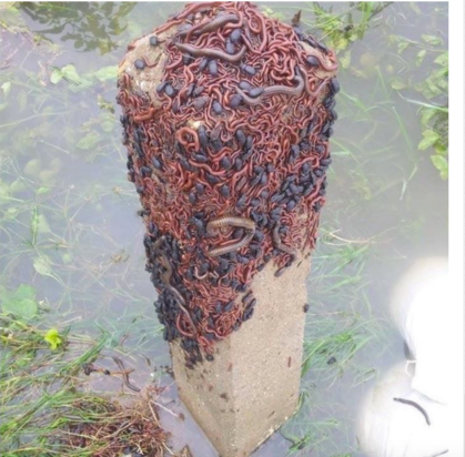 Insects in flood